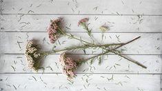 This bouquet spotlights rice flower, whose subtle appearance make it powerhouse filler.