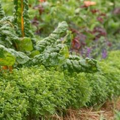 How to design a smart succession plan that yields fresh food from spring until snowfall. | From Organic Gardening