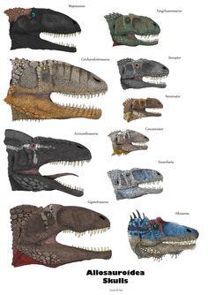 Allosauroidea Skulls (with colors) by Iguana-Teteia