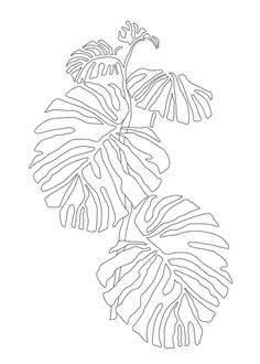 caladium bulbs, labels 300 pcs, strawberry plants plants vs zombies roof level plants vs zombies books list, purple butterfly plants and flowers, planet express ship. Leaf Drawing, Plant Drawing, Line Drawing Art, Flower Line Drawings, Botanisches Tattoo, Tattoos, Plant Art, Leaf Art, Acrylic Paintings