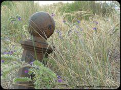 nature, naturaleza, rusty, oxidado, plants, iron, hierro https://letsgetlostlet.wordpress.com/2015/12/02/nature-vs-human/