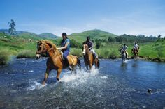 Free State Horse Riding - Come and enjoy the fresh air, sweeping skies and majestic mountains of the Free State on horse-back. Guided outrides cater for all levels of ability and you can choose between different safe scenic rides.