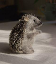 shaggy hedgehog