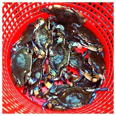 Days Catch of Crabs, Crab Feast Crab Feast, Food Themes, Pot Roast, Maryland, Nom Nom, Seafood, Main Dishes, Blue Crabs, Eat