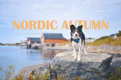 7 Autumn Adobe Lightroom presets for dog photography on ETSY