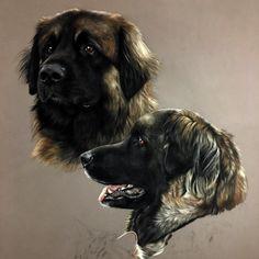 MARION TUBIANA Pastel Portraits, Dog Portraits, Animal Paintings, Animal Drawings, Tiger Tattoo, Dog Art, Beautiful Paintings, Great Artists, Dog Breeds