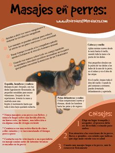 Masaje para perros
