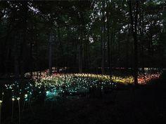 Il est temps de vous faire rêver... Un jardin illuminé comme vous n'en avez jamais vu !