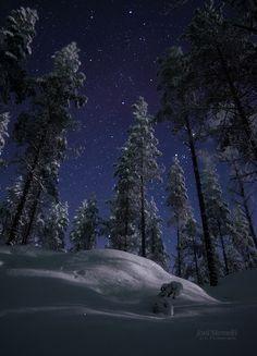Moonlit Forest by ~Nitrok on deviantART