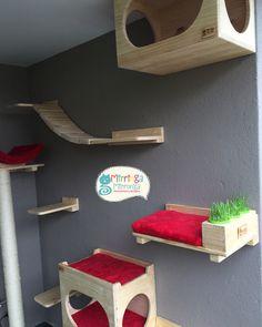 Gimnasio personalizado con matera de pasto para gatos