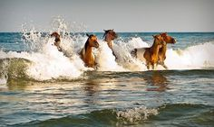 Ponies from Assateague Island in Maryland. Near Ocean city. They are gorgeous!