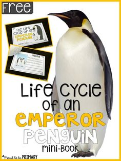 All About Penguins: Non-fiction and science penguin activities for the primary classroom are shared, along with a free Emperor penguin life cycle mini-book. Penguin Life, Science Penguin, Preschool Science, Teaching Activities, Teaching Science, Teaching Ideas, Winter Activities, Teaching Resources, Grade 2 Science
