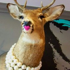 Deer I Saw In Juicy Couture Hawaii My Next One Room Will Look Like This