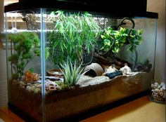 Welcome to crab heaven! I decided to uprgrade to a 29 gallon tank so I can enjoy my crabs even more! In this new crabitat, I added a bubblin. Hermit Crab Cage, Hermit Crab Homes, Hermit Crab Habitat, Hermit Crabs, Classroom Pets, Pet Snails, Reptile Room, Reptile House, Crab House