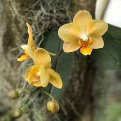 Loving this extra hour of daylight. #flower #flowers #garden #mygarden #inbloom #bloom #pretty #gorgeous #flowerstagram #nature #picoftheday #rainbowsendgarden #florida #southflorida #floridalife #gardening #gardenlife #life #enjoy #love #thankful #photography #orchids #photoshoot #joy #orchid #orchidlover #orchidea #orchidstagram