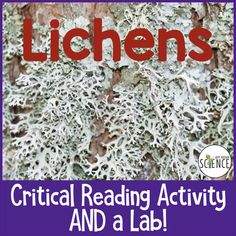 Lichens: Informational Text, Critical Reading, and Lab Activity Common Core Science, Ag Science, 6th Grade Science, Science Biology, Science Lessons, Teaching Science, Science Education, Life Science, Earth Science