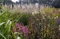 It looks good at every stage, it adds height to a small garden, it attracts pollinators. Is there anything veronicastrum can't do?