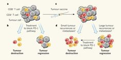 Two personalized cancer vaccination strategies are shown to be safe and to provide clinical benefit to patients with high-risk melanoma in small-scale human trials reported in two separate papers published in Nature this week. This News & Views article discusses the findings. #Beautiful #Nature #Entertainment #Animal #Style #Tattoos #Funny #DIY