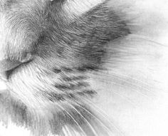drawing realistic hair and fur with pencil tutorial