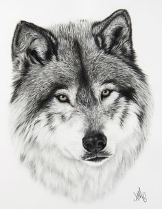 Wolf with Golden Eyes - amysdrawings.com