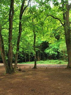 Brillance du vert au printemps dans la forêt autour du Lac de Châtellerault