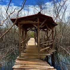 Bridge in between mangrove in Playa Avellanas, Costa Rica