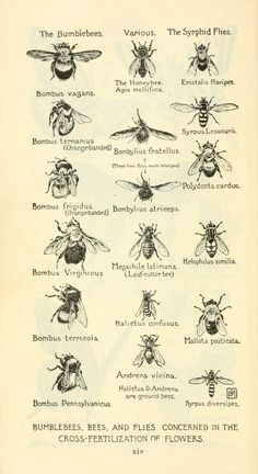 Visual directory of bees from old encyclopedia