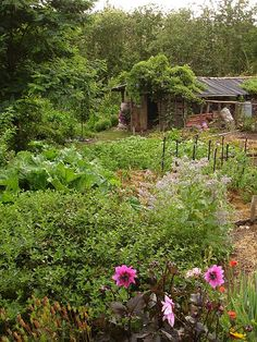 beautiful garden & chook house