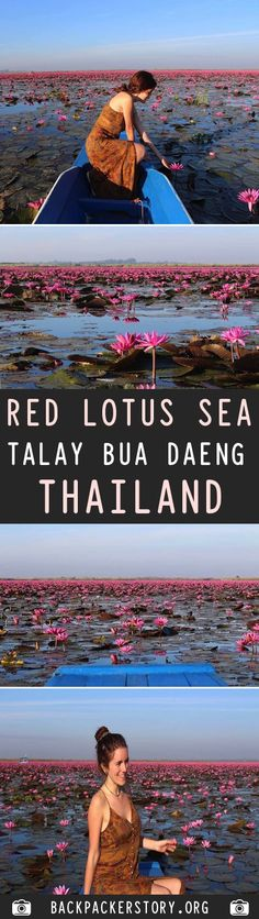 The Red Lotus Sea, officially known as Talay Bua Daeng, is located south of Udon Thani, in Northeast Thailand. How to get to Red Lotus Sea Visit Thailand, Thailand Travel, Travel And Tourism, Travel Usa, Beach Trip, Beach Travel, Country Maps, Travel Guides, Travel Tips