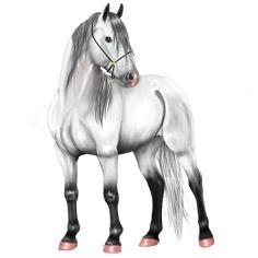 ♥María♥, Caballo de montar Pura raza española Gris t - Caballow
