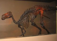 Vandals in Alberta damage the fossilised skeleton of a duck-billed dinosaur.