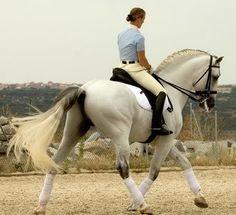 Resultados de la Búsqueda de imágenes de Google de http://www.marketzone.es/resources/repository/partners/stores/d7c9adfd6eaa48a0b32f875ee/marquee_3/yeguada_ventura_benitez_rafael_camacho_caballos_pura_raza_002.jpg