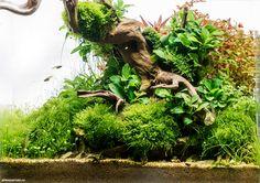 Результаты 1 этапа конкурса аквариумного дизайна Scaper's Tank Contest 2014 | Все для аквариума, террариума и пруда