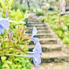 La Provence en automne, la rosée du matin, ou l'odeur des plantes juste après la pluie... un escalier en pierre, nous sommes dans les Jardins de la Méditerranée  C'était dimanche pendant #instaGSTnature   @manoush_ka  ➡️ Tag & Follow #GolfeStTropez to be reposted ⬅️ #domainedurayol #rayolcanadel #nature #cotedazurnow #paca #jaimelapaca #levarois #jardins #fleurs #flowers #flowerpower #laprovence #instaprovence #automne #fall
