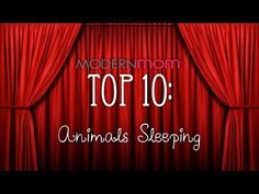 Sleepy Animals - ModernMom Top 10 OMG you have to watch, this is the cutest video EVER!