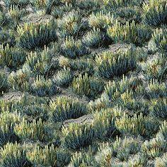 Quilting Treasures Where The Buffalo Roam Bush Forest