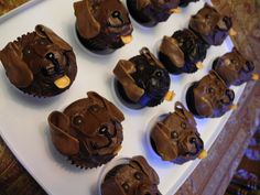 Chocolate Labs Cupcakes