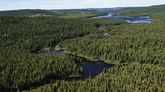 Desktop Activist Tucson : Tell Costco: protect the boreal forests. Use recyc. 52 Reasons Why I Love You, Bristol Bay, Carlsbad Caverns National Park, Deepwater Horizon, Northern Canada, Coleman Lantern, Pine Forest, Birds Eye View, Beautiful Landscapes