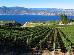 What the Okanagan is all about! Luxury #accommodation: www.lakeviewmemories.com