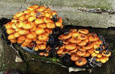 Mushrooms Art Print featuring the photograph Psychedelic by Cuiava Laurentiu Mushroom Art, Thing 1, Psychedelic Art, All Print, Wood Print, How To Be Outgoing, Fine Art America, Design Art, Stuffed Mushrooms