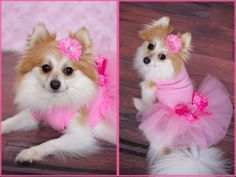 A cute pink dress, looks like is available from Bloomingtails Dog Boutique in pug sizes. I haven't ordered from them before, so I can't personally guarantee their products, but this is cute!