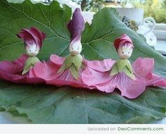 amazing weird flowers For more funny pictures, visit http://funnyneel.com/funny-pictures http://FunnyNeel.com ). Follow us www.pinterest.com/webneel/funny-pictures
