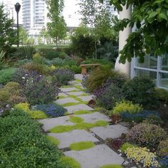 scotch moss pathway   Landscape seaside Design Ideas, Pictures, Remodel and Decor