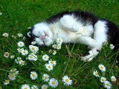 Daisy Cat!