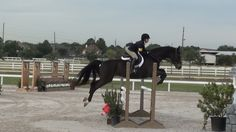 "Rob says, ""I think your equitation is mostly excellent."" Click to find out why."