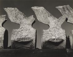 Edward Weston, Whale Vertebra, 1934