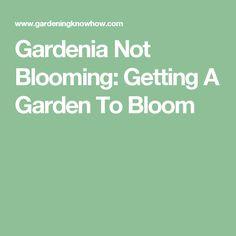 Gardenia Not Blooming: Getting A Garden To Bloom