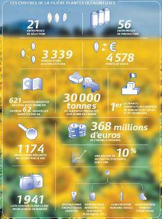 La filière #oléagineux #semences en chiffres :) A retrouver dans le rapport annuel GNIS http://bit.ly/1HYfh8V