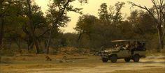 #safari #botswana #moremi-game-reserve #camp-okuti #travel #honeymoon