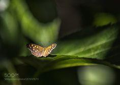 Butterfly by DiEllephoto via http://ift.tt/1UmN0xq